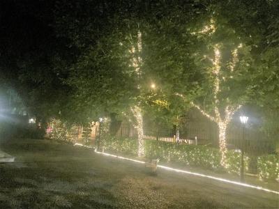 Decoração de natal arvore - Aluguel decoração de natal